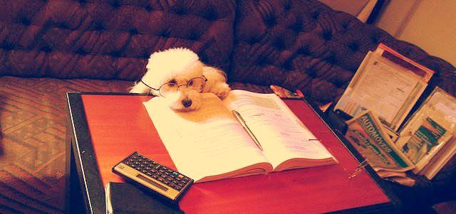 宿題が嫌い